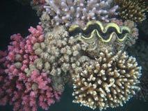 珊瑚红海贝壳 免版税库存图片