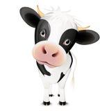 母牛一点 免版税图库摄影