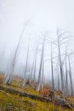 停止的雾森林 免版税库存照片