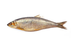 鲱鱼 图库摄影