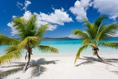 海滩海岛热带的棕榈树 免版税库存照片