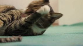 猫 股票视频