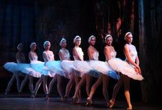 озеро балета выполнило королевского русского лебедя Стоковые Фотографии RF