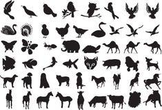 животные силуэты Стоковые Фотографии RF