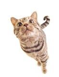 滑稽的小猫甜点 免版税库存照片