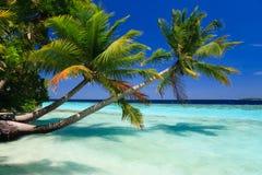 热带马尔代夫的天堂 免版税库存图片
