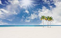 海滩佛罗里达迈阿密热带的棕榈树 库存照片