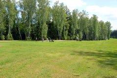 игроки в гольф страны клуба Стоковые Изображения RF