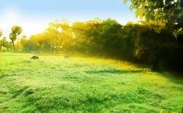 утро мистическое Стоковая Фотография