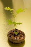 сбережения роста ваши Стоковая Фотография