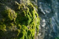 мох пущи Стоковые Фото