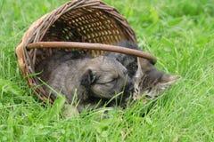φίλοι σκυλιών γατών Στοκ Εικόνες