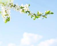 задняя часть приходит весна Стоковые Изображения