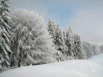 横向结构树冬天 免版税图库摄影