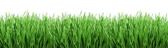草绿色 免版税库存照片