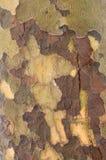 纹理结构树 库存照片