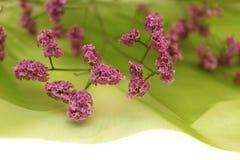 предпосылка цветет зеленая мягкая весна Стоковая Фотография RF