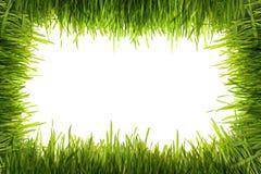 белизна зеленого цвета травы предпосылки Стоковое Изображение