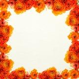 предпосылка цветет померанцовая белизна текстуры Стоковая Фотография