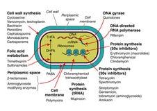 антибиотики Стоковые Фотографии RF