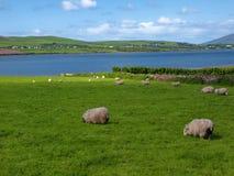 充满活力沿海爱尔兰风景的海景 免版税库存照片