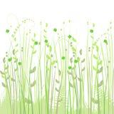 背景花卉草甸 库存照片