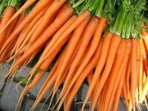 сад моркови Стоковая Фотография