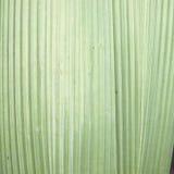 苍白背景绿色的叶子 免版税库存照片