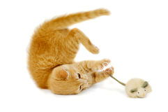 мышь кота Стоковое Фото