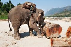 εργασία ελεφάντων Στοκ εικόνα με δικαίωμα ελεύθερης χρήσης