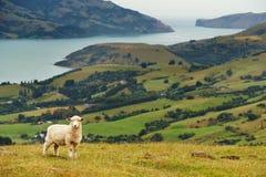 横向新西兰 免版税库存照片