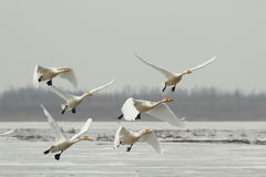 льдед летания с реки Стоковое Изображение