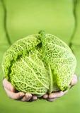 удерживание зеленых рук капусты головное Стоковое Изображение RF