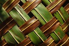 φύλλα καρύδων Στοκ εικόνα με δικαίωμα ελεύθερης χρήσης