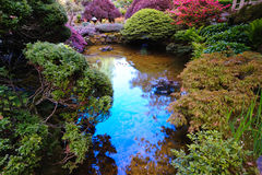 ιαπωνική λίμνη κήπων Στοκ Φωτογραφία