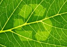 βιώσιμος Στοκ εικόνα με δικαίωμα ελεύθερης χρήσης
