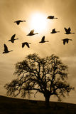 变老的仅有的雾橡树冬天 免版税图库摄影
