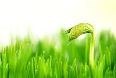 φυτό γενεθλίων μικρό Στοκ εικόνα με δικαίωμα ελεύθερης χρήσης