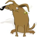собака злостая Стоковое Изображение