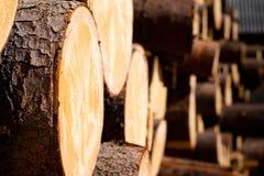 木头 免版税图库摄影
