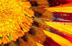 花杂色菊属植物 免版税库存图片
