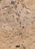 μυρμήγκια Στοκ Εικόνες