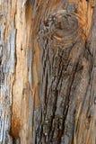 结构木头 免版税库存图片