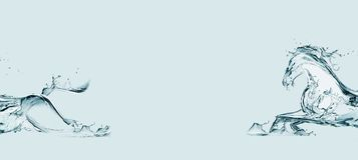 вода лошади Стоковое фото RF