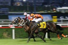 гонка лошади отделки Стоковое Фото