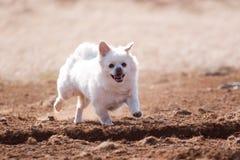 狗连续沙子 免版税库存图片