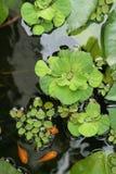 浮动的工厂池塘 免版税图库摄影