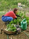 выбранная мангольдом сельская пея женщина песни Стоковые Фотографии RF