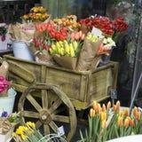 五颜六色的花种类 库存图片
