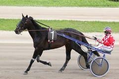 Άλογο ιταλικά που συναγωνίζεται: ο νικητής Στοκ εικόνα με δικαίωμα ελεύθερης χρήσης
